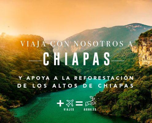 Reforesta un Bosque: Los Altos de Chiapas