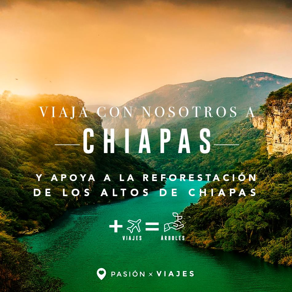 Reforesta un Bosque: Los Altos de Chiapas